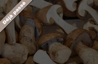 Cueillette des champignons à Azay